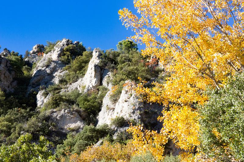 La Souces des Orris à La Roquebrussanne